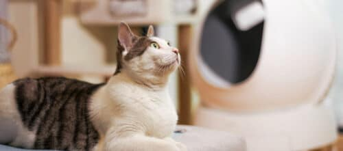 litières pour les chats animaux