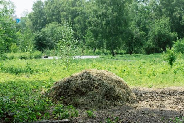 végétaux du jardin broyer
